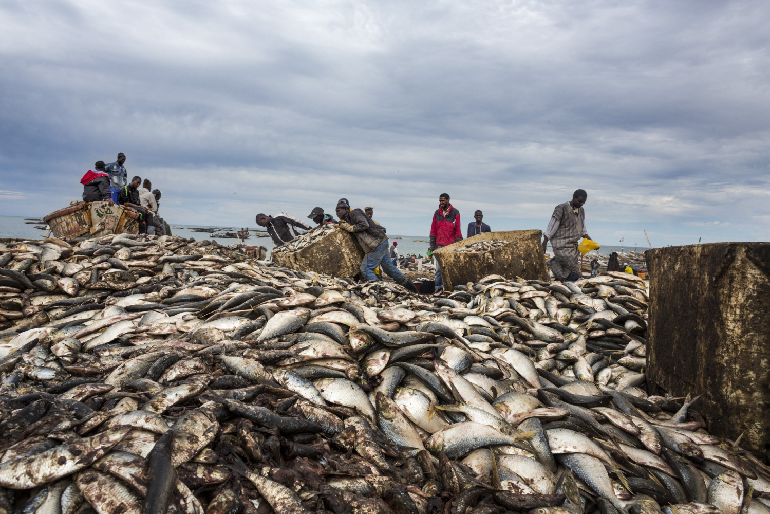 Every year we catch over 100 million tons of fish, plundering seas and oceans, which we continue to pollute with our plastic and toxic residues. One third of global fish stocks are overexploited, meaning we catch them faster than they can reproduce to sustain population levels. Fish is an important source of food supply, particularly for less developed countries. We must reduce fish consumption and allow time for seas and oceans to repopulate.